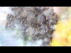 Insectos y Humanos armonizan en una Sinfonía de sonido arquitectónico