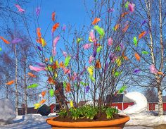 A Swedish Easter tradition involves decorating birch tree branches with feathers. These beautiful arrangements are used to decorate inside and out. Sometimes eggs and chicks are added to the branches. See thefeatherplace.com for supplies.