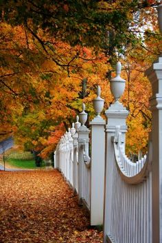"""This is a favorite pin of mine.  [I agree with whomever originally pinned this photo w/their words in these quotations...couldn't have said it better myself; so leaving as is..] I love the gorgeous fence, fall leaves, and what might be waiting through that gate."""