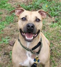 ADOPTED! Dre is ready to find his forever home! He is smart, energetic, and would love to join your family!