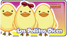 Los Pollitos Dicen/ The Little Chicks Squeal Latino Nursery Rhyme   SITIO OFICIAL de la Gallina Pintadita: http://www.gallinapintadita.com ENGLISH VERSION - Lottie Dottie Chicken: http://www.youtube.com/channel/UCZHdAYwbN-k3V...