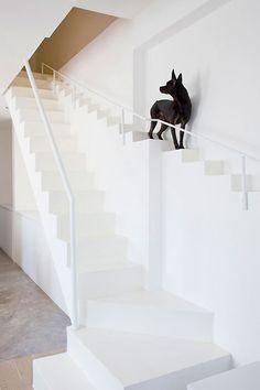 schody dla psa / stairs for dog