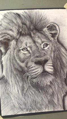 Realistic Lion Drawing, Realistic Pencil Drawings, Art Drawings Sketches Simple, Pencil Sketches Of Animals, Animal Skull Drawing, Pencil Drawing Inspiration, Lion Sketch, Graphite Art, Drawing Challenge