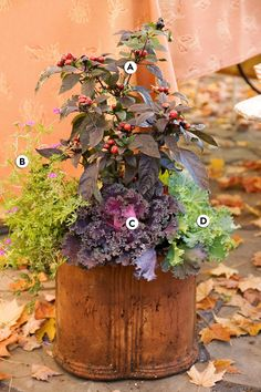 Ornamental black pepper (Capsicum annuum 'Black Pearl') makes an outstanding display in a rusty cast-iron pot with pink verbena, bold purple kale, and ornamental cabbage. #fallcontainergarden #containergardenplans #fallgardening #flowerpots #bhg Fall Container Plants, Fall Containers, Container Flowers, Container Gardening, Indoor Gardening, Succulent Containers, Container Design, Vegetable Gardening, Gardening Tips