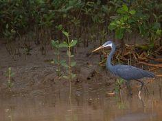 Bird Sanctuaries in Andhra Pradesh, India @ Sanctuariesindia.com