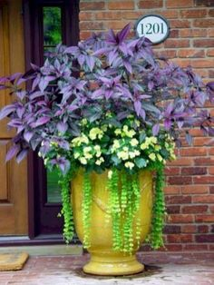 Shade to part sun container garden with amaranthus, impatiens and creeping jenny. Shade to part sun container garden with amaranthus, impatiens and creeping jenny! by Lorraine Maddox Container Flowers, Container Plants, Container Gardening, Succulent Containers, Beautiful Gardens, Beautiful Flowers, Beautiful Gorgeous, Pot Jardin, Cactus Y Suculentas