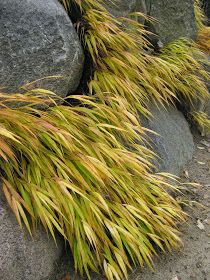 Golden Forest Grass For Impact Ornamental Grasses For Shade, Rockery Garden, Shade Grass, Shade Garden, Botanical Gardens, Herbs, House Exteriors, Landscape, Rotary