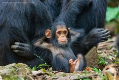 Comedy Wildlife Photography Awards: here are the photos of the funniest wild animals of 2019 - GreenMe.it - Comedy Wildlife Photography Awards: here are the pictures of the funniest wild animals of 2019 – - Comedy Wildlife Photography, Wild Animals Photography, Photography Awards, Nature Photography, Funny Photography, Outdoor Photography, Travel Photography, Funny Animal Photos, Animal Pictures