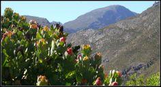 RivierSonderendMountains Natural Beauty, Mountains, Nature, Plants, Travel, Naturaleza, Viajes, Destinations, Plant