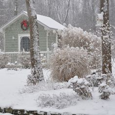 Yes, this time of year can be a sad one for gardeners, but there is still a lot of beauty and gardening joy to be experienced even in the depths of winter.