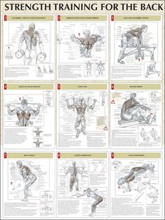 Strength Training For The Back Chart