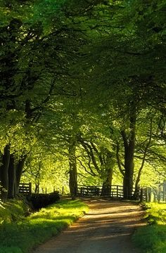 Peaceful Little Country Road Country road.take me home. Beautiful World, Beautiful Places, Beautiful Pictures, Esprit Country, Country Life, Country Roads, Country Walk, Country Living, Farm Life