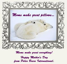 At nap time, my mom made a Grrreat pillow! Polar Bears International, Im In Love, Happy Mothers Day, Teddy Bear, Pillows, Animals, Weird, Pets, Life