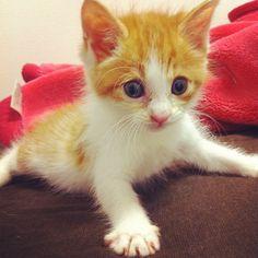 @rietasu   ちゃい #cat #catstagram   Webstagram (ウェブスタグラム) - インスタグラムをパソコンで見れるサービス