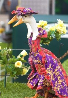 Haute Couture Geese! This reminds me of the Beatrix Potter books.