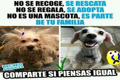 Lo ve dog Animals And Pets, Funny Animals, Cute Animals, Pet Dogs, Dog Cat, Super Anime, Best Dog Training, Stop Animal Cruelty, Vegan Animals