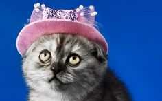 nice very fashionable cat wallpaper