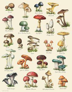 Botanical Drawings, Botanical Illustration, Botanical Prints, Autumn Illustration, Botanical Posters, Photo Wall Collage, Collage Art, Mushroom Art, Mushroom Drawing