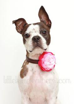 Rosette Wool Felt Flower Dog Accessories - Wedding Accessories - Felt Flowers - PICK YOUR COLOR. $13.75, via Etsy.