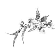 Drawing flowering gum by Pip Compton Shin Tattoo, Bee Tattoo, Cute Tattoos, Small Tattoos, Australian Tattoo, Australian Native Flowers, Drawing Practice, Pastel Art, Fantasy Creatures