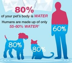 Pet Hydration Awareness Month, Why Now?
