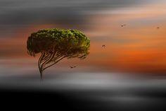 tree *** by stefano giacomini on One Tree, Tree Of Life, Fine Art Photo, Shrubs, Dandelion, Leaves, Landscape, Amazing, Flowers