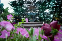 Spring is in bloom at the Pines Manor