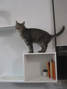The Sophia Wall Mounted Cat Tree by Designer Pet Products