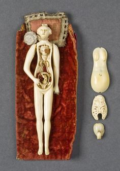 """Female ivory anatomical figures of this type were popular in the 1600 and 1700s, and were almost always shown as pregnant... The figure was possibly made to teach young couples about anatomy and pregnancy or it may have been a collector's item."""