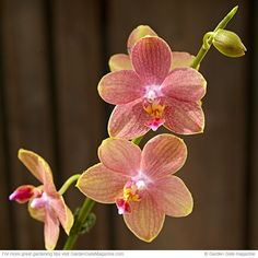Easy orchid care   Garden Gate eNotes