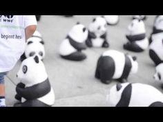 Anlässlich unseres 50. Geburtstages gehen wir von August bis Oktober 2013 mit 1600 Panda-Skulpturen auf Deutschlandtour. So viele der Großen Pandas leben noch in Freiheit. Damit möchten wir auf die Zerstörung des Lebensraums vieler Arten aufmerksam machen. http://www.wwf.de/50-jahre-wwf-deutschland/pandas-on-tour-der-wwf-auf-tour-durch-deutschland/