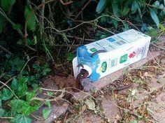 Build a poison-free slug trap by first mixing one liter of water 25 g of malt extract and 30 ml of alcohol. The angered Slug Trap, Pallets Garden, Garden Pests, Green Garden, Vegetable Garden, Tricks, Gardening Tips, Outdoor Gardens, Garden Design