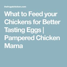 What to Feed your Chickens for Better Tasting Eggs | Pampered Chicken Mama