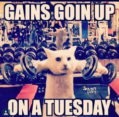 Gains goin up on a Tuesday