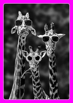 I wear my sunglasses at night....(♪♫ Click the enlarged image to hear the music ♪♫)