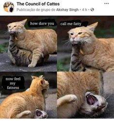 Stupid Animals, Cute Funny Animals, Cute Baby Animals, Animals And Pets, Cute Cats, Funny Animal Quotes, Cat Quotes, Animal Memes, Kitten Mittens