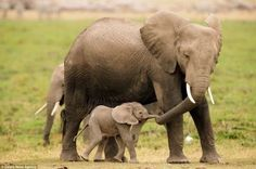 Pure Love: Animals Parenting Their Young   Nature - BabaMail