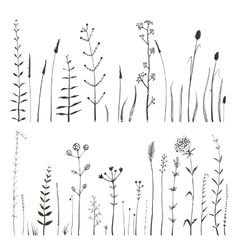 Sketchy wild field flowers and grass on white vector 4402761 - by Popmarleo on VectorStock®