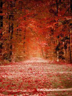 Autumn is unbelievable