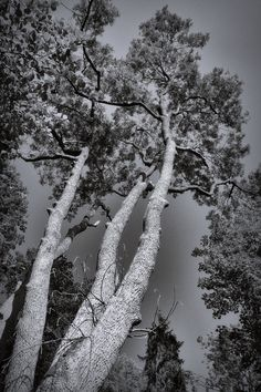 bwstock.photography  //  #trees Black White Photos, Black And White, Free Black, Public, Trees, Nature, Photography, Outdoor, Color