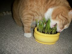 Tiggy loves grass...ALOT!