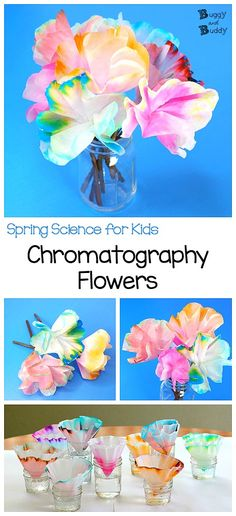 Chromatography Flowers: STEAM Activity for Kids- This spring science activity is an easy way to explore the separation of colors rather than color mixing. And when you're done, you can turn your results into a colorful coffee filter flower bouquet! (Great for spring or even Mother's Day!) ~ BuggyandBuddy.com #steam #stem #chromatography #coffeefiltercrafts #flowercrafts #springscience via @https://www.pinterest.com/cmarashian/boards/