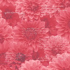 Muriva Floral Wallpaper Chrysanthemum Red