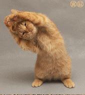 olahraga kucing :D