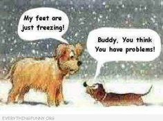 funny cartoons dogs standing in snow y feet are frozen shorter dog you think you have problems
