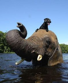 Elephant and Dog playing in the water - Photos