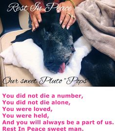 DIED after being RESCUED by southernpawdogs@gmail.com --- PLUTO (A1685530)I am a male black Labrador Retriever.  The shelter staff think I am about 8 years old.  I was found as a stray and I may be available for adoption on 03/18/2015. —  Miami Dade County Animal Services.   https://www.facebook.com/SouthernPawDogs/photos/a.994448823904237.1073741828.994203620595424/1090828407599611/?type=1
