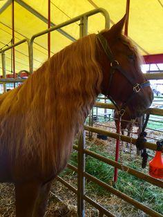 Outstanding Die 8 Besten Bilder Von Tinker Pferde Tinker Pferd Pferde Squirreltailoven Fun Painted Chair Ideas Images Squirreltailovenorg