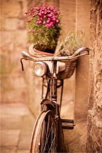 I want a vintage bike with a basket to collect wild flowers. :)