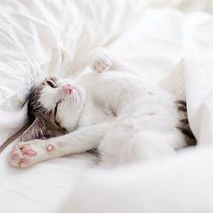 Kitty snuggle fest anyone? ❤️ #Sunday #snuggles #cutecat
